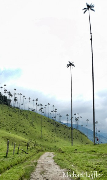dia diem du lich Colombia-Cocora Valley